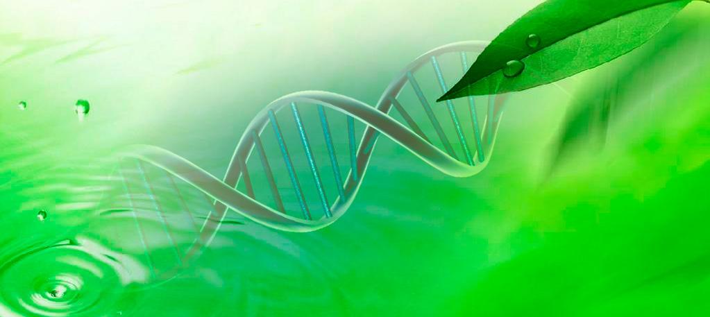 Biotécnica